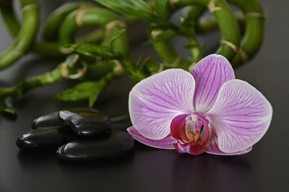 Orchidee und schwarze Steine Bambus lizenzfrei pixaby